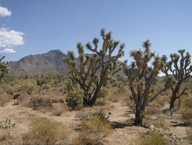 KL CEWE Fotowettbewerb 2013 Leserfotos Patrick Schöttke - Lesertext: 2011 sind wir auf unserem Trip durch die USA auch durch Death Valley gefahren. Hier sind diese Bilder entstanden. neu