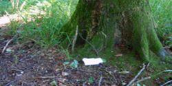 KL Klopapier im Wald