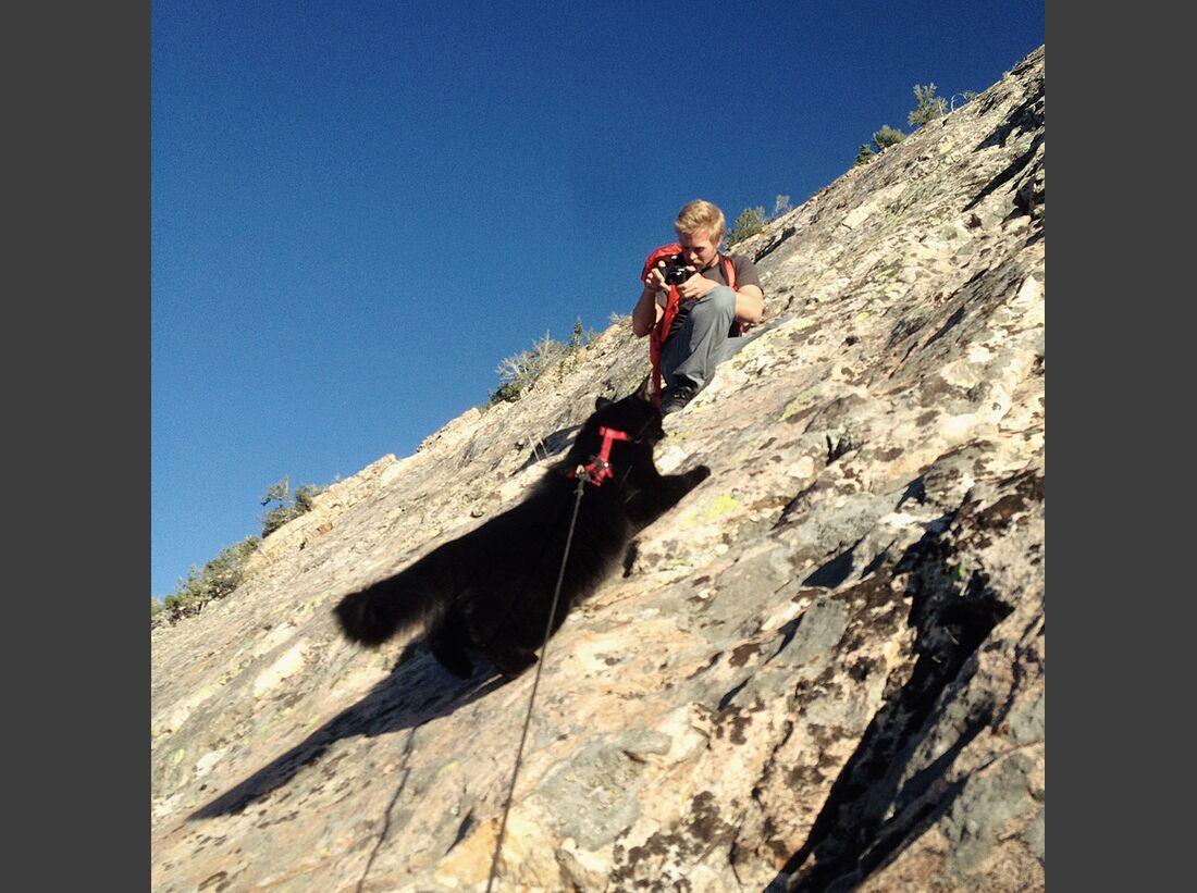 kl-craig+millie-kletternde-katze-photo-shoot-climbbbb (jpg)